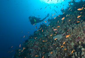 Pristine Cairns Reefs