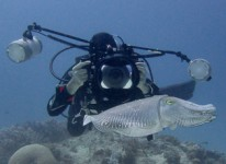 Cuttlefish Confrontation - Photo 2